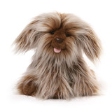 Puppy Dog Shaggy Layla - Gund